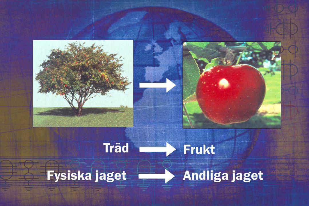Träd Frukt Fysiska jaget Andliga jaget