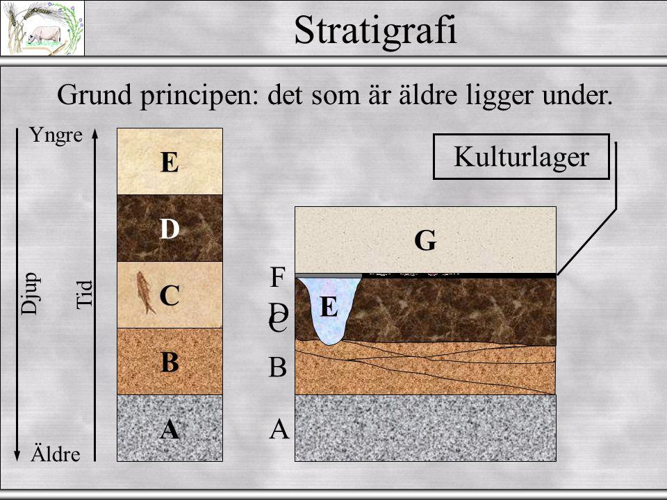 Stratigrafi Grund principen: det som är äldre ligger under. E