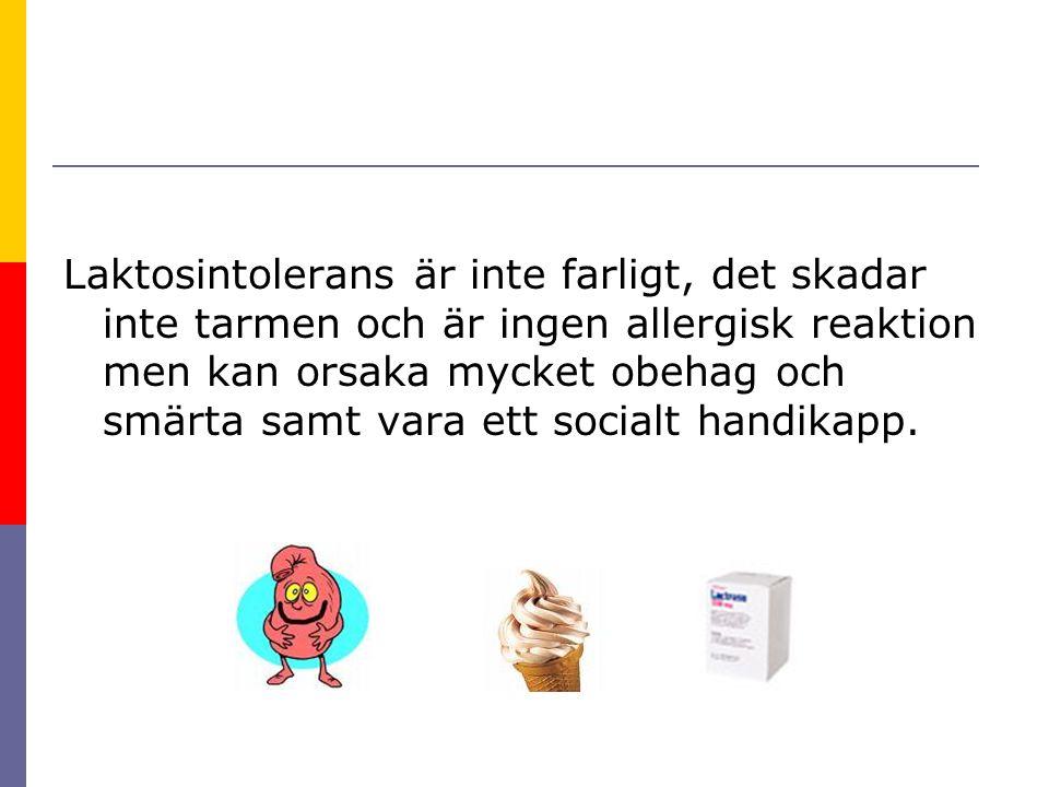 Laktosintolerans är inte farligt, det skadar inte tarmen och är ingen allergisk reaktion men kan orsaka mycket obehag och smärta samt vara ett socialt handikapp.