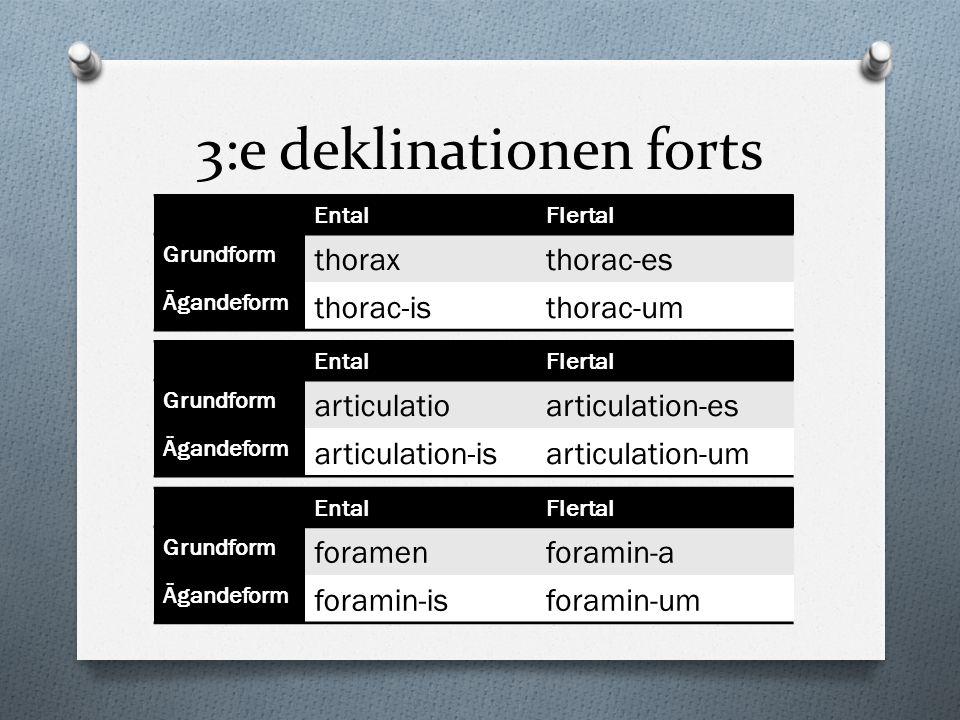 3:e deklinationen forts