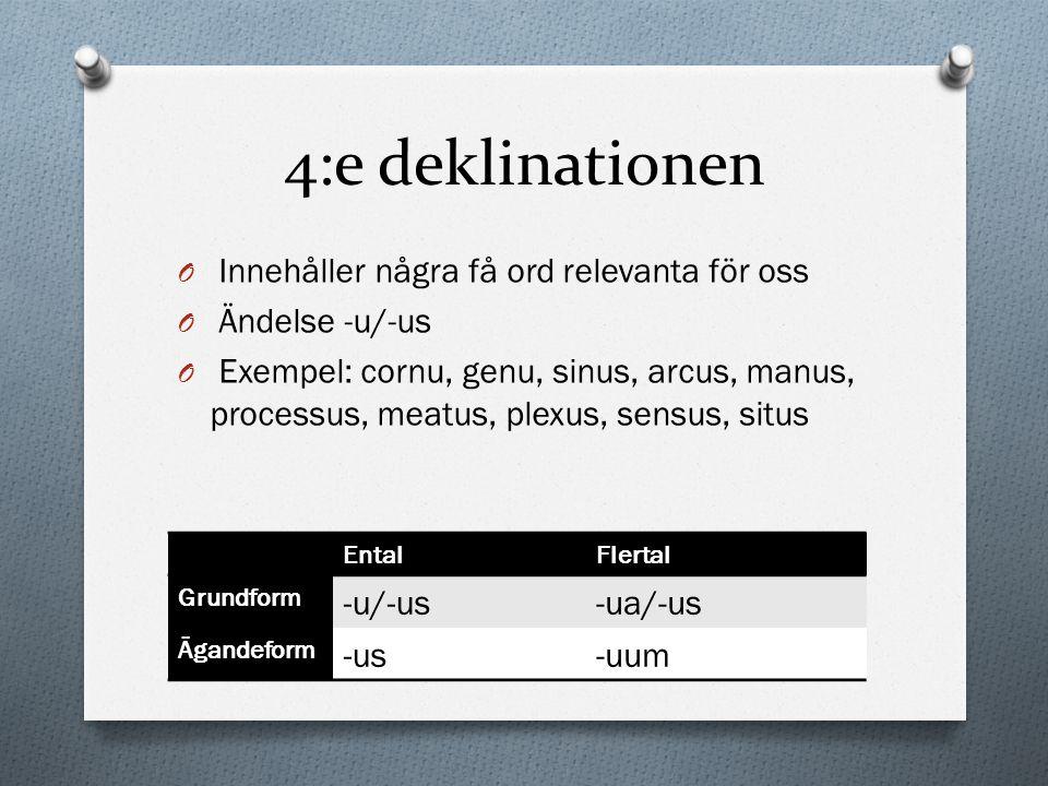 4:e deklinationen Innehåller några få ord relevanta för oss