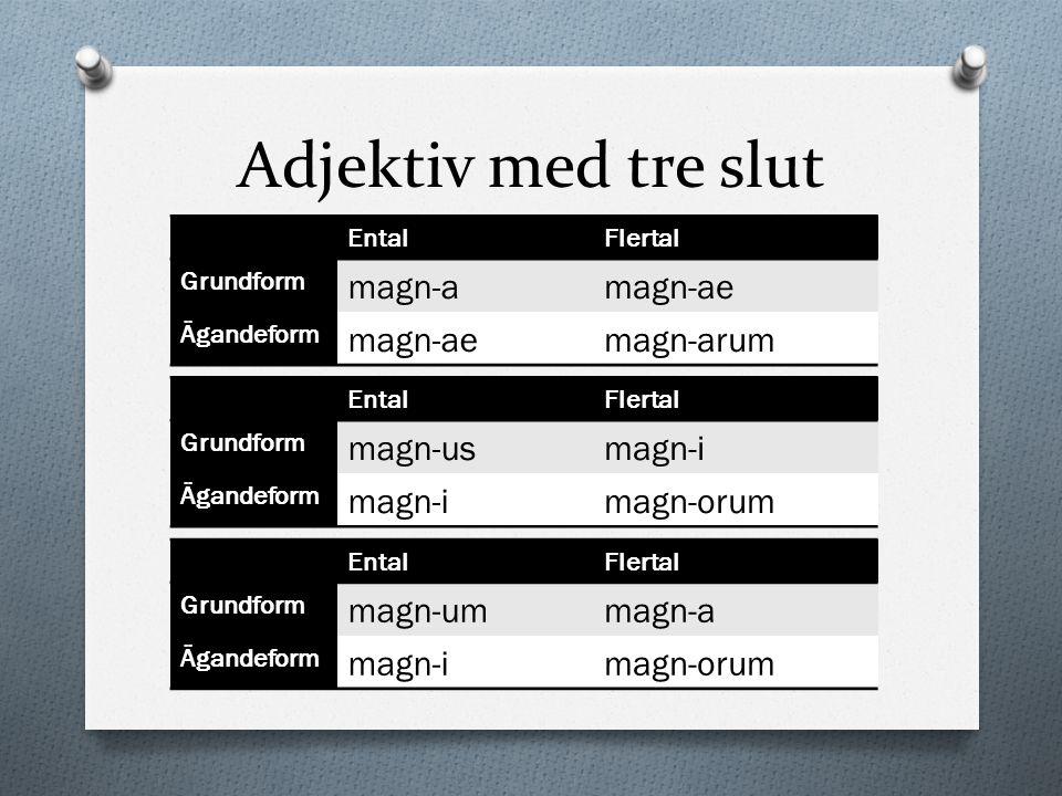 Adjektiv med tre slut magn-a magn-ae magn-arum magn-us magn-i