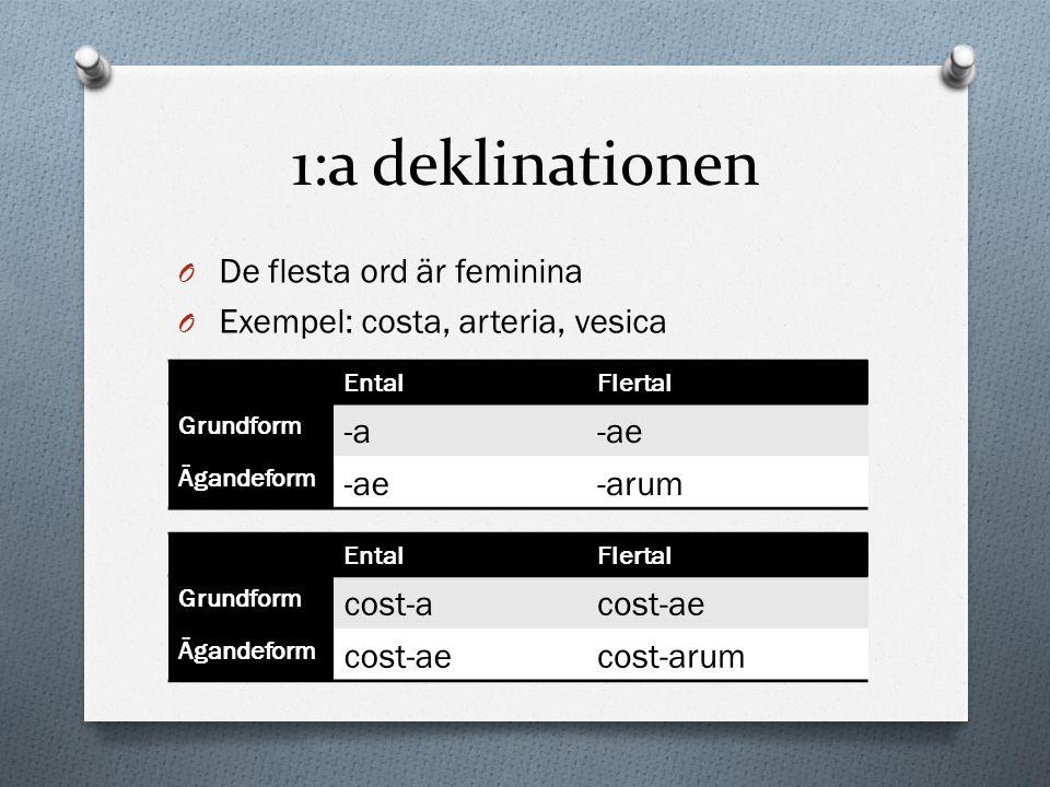 1:a deklinationen De flesta ord är feminina