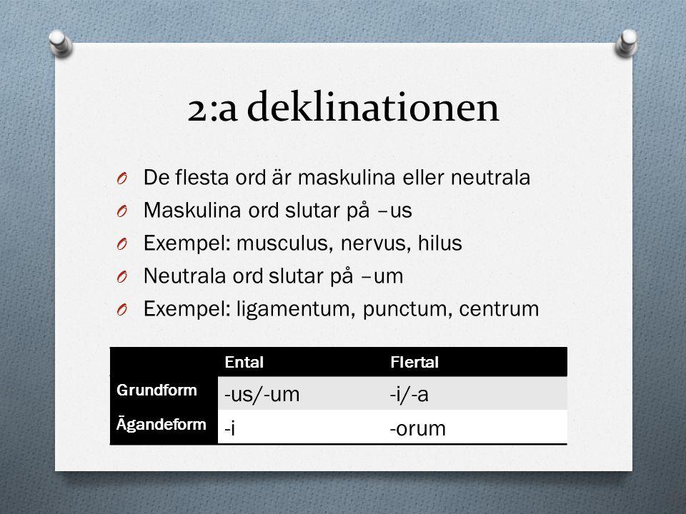 2:a deklinationen De flesta ord är maskulina eller neutrala