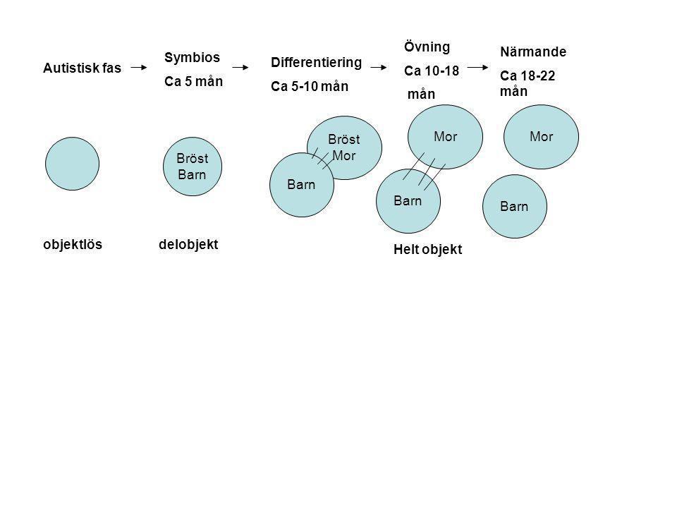 Övning Ca 10-18. mån. Närmande. Ca 18-22 mån. Symbios. Ca 5 mån. Differentiering. Ca 5-10 mån.