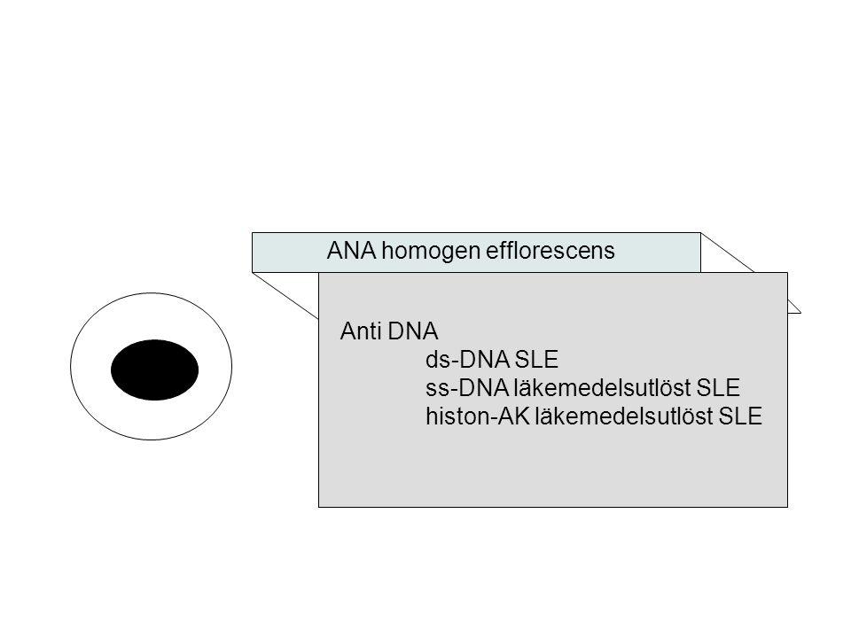 ANA homogen efflorescens