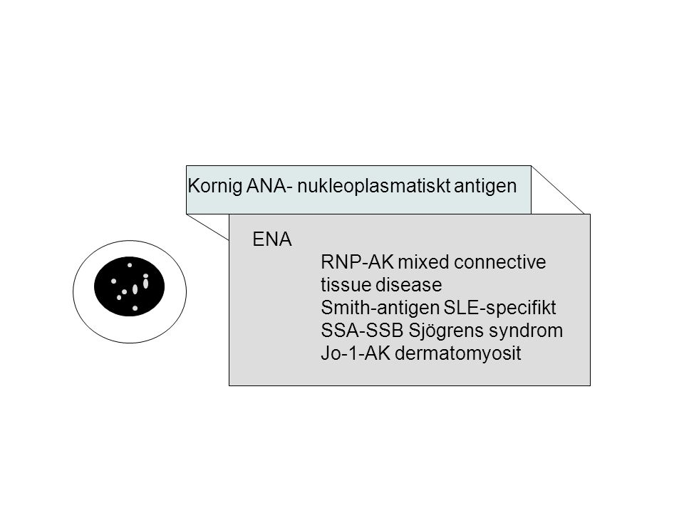 Kornig ANA- nukleoplasmatiskt antigen