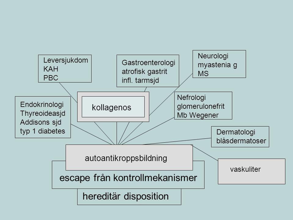 Autoimmun sjukdom autoantikroppsbildning