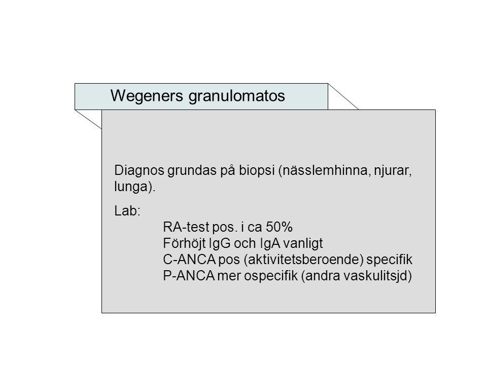 Wegeners granulomatos