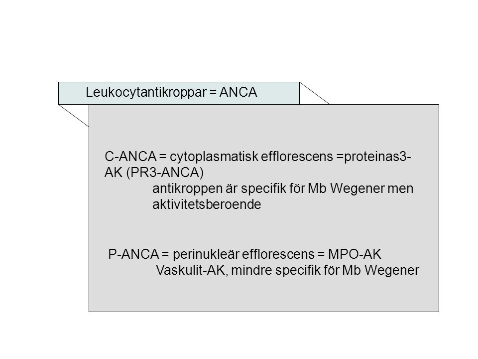 Leukocytantikroppar = ANCA
