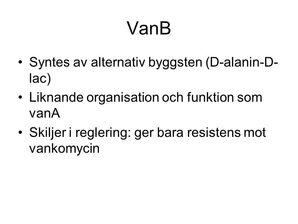 VanB Syntes av alternativ byggsten (D-alanin-D-lac)