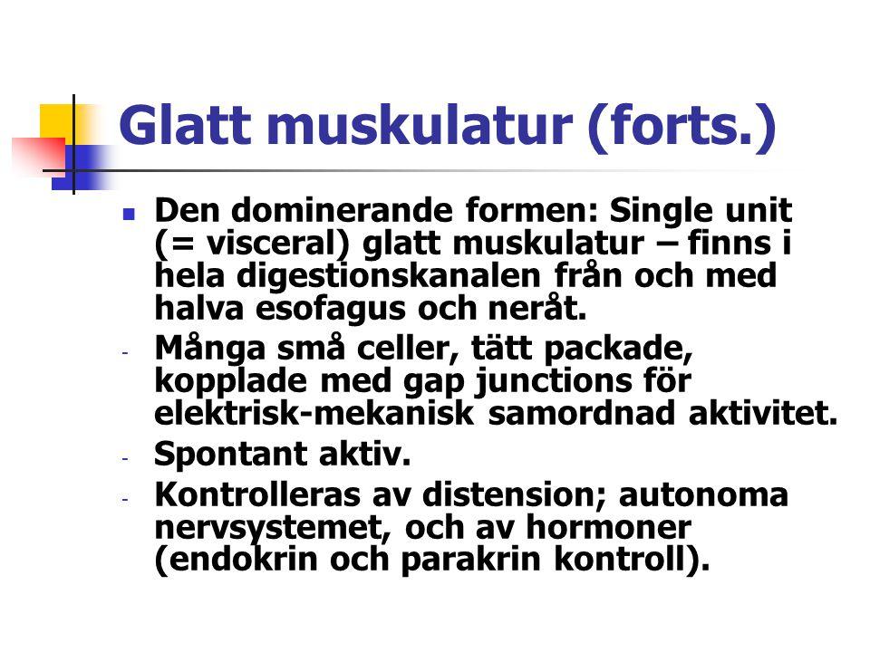 Glatt muskulatur (forts.)