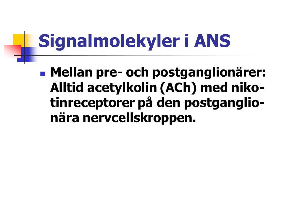 Signalmolekyler i ANS Mellan pre- och postganglionärer: Alltid acetylkolin (ACh) med niko-tinreceptorer på den postganglio-nära nervcellskroppen.