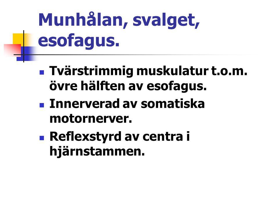 Munhålan, svalget, esofagus.