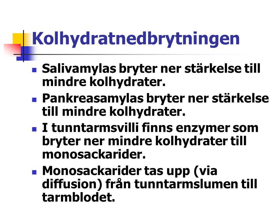 Kolhydratnedbrytningen