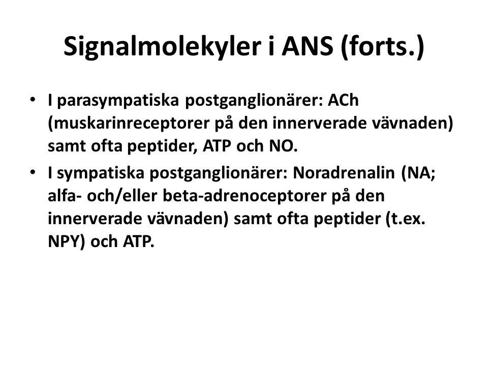 Signalmolekyler i ANS (forts.)
