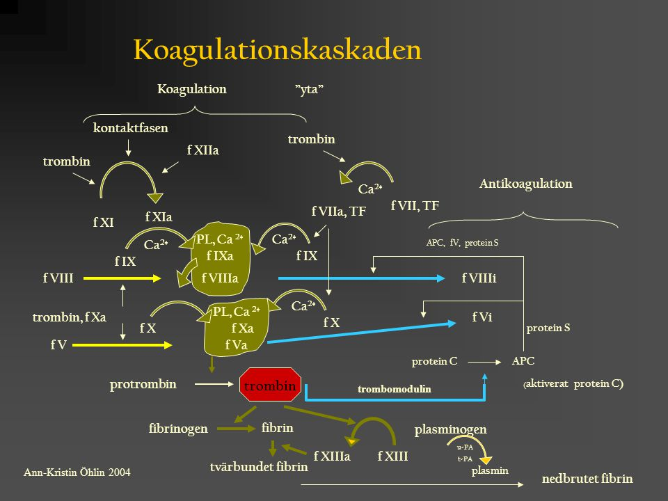 Koagulationskaskaden