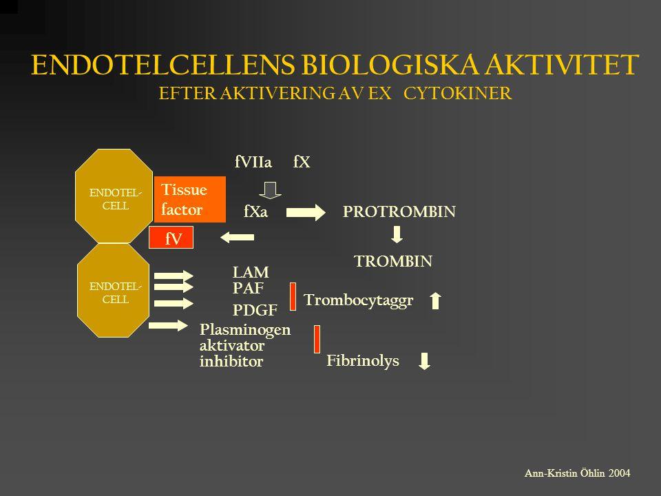 ENDOTELCELLENS BIOLOGISKA AKTIVITET EFTER AKTIVERING AV EX CYTOKINER