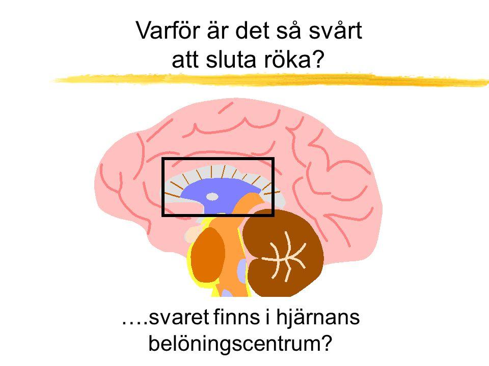 ….svaret finns i hjärnans belöningscentrum