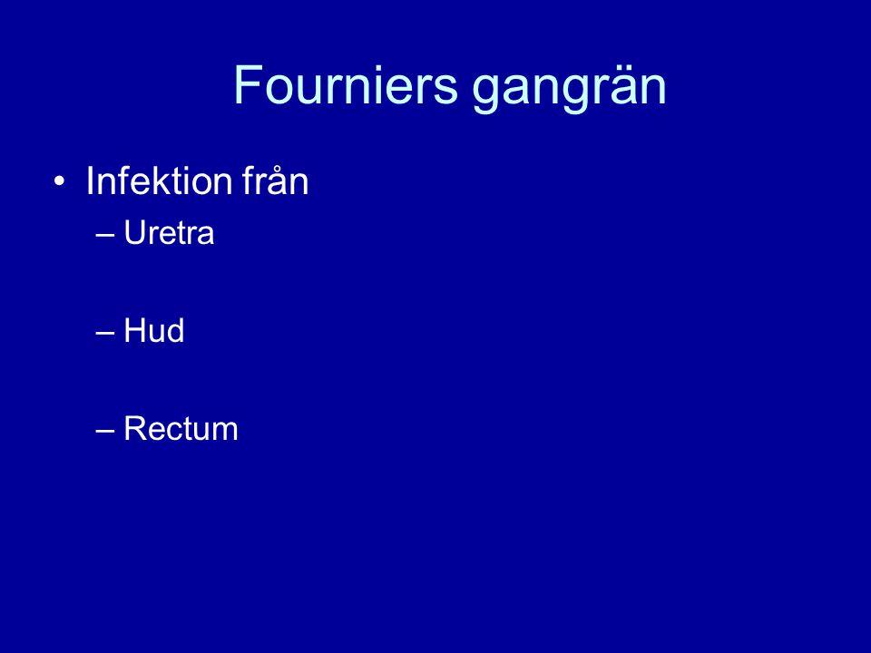 Fourniers gangrän Infektion från Uretra Hud Rectum