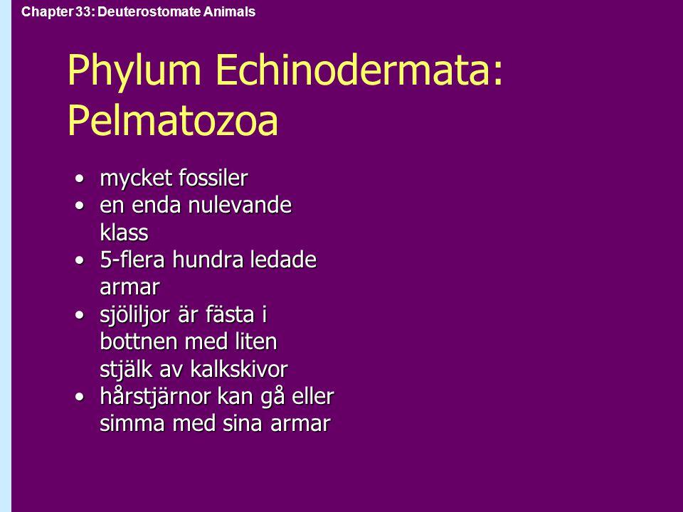 Phylum Echinodermata: Pelmatozoa