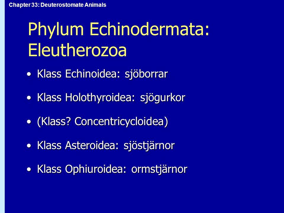 Phylum Echinodermata: Eleutherozoa