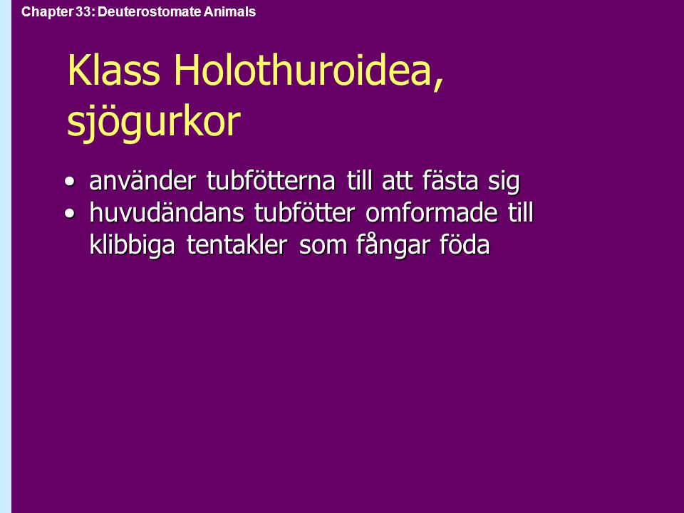 Klass Holothuroidea, sjögurkor