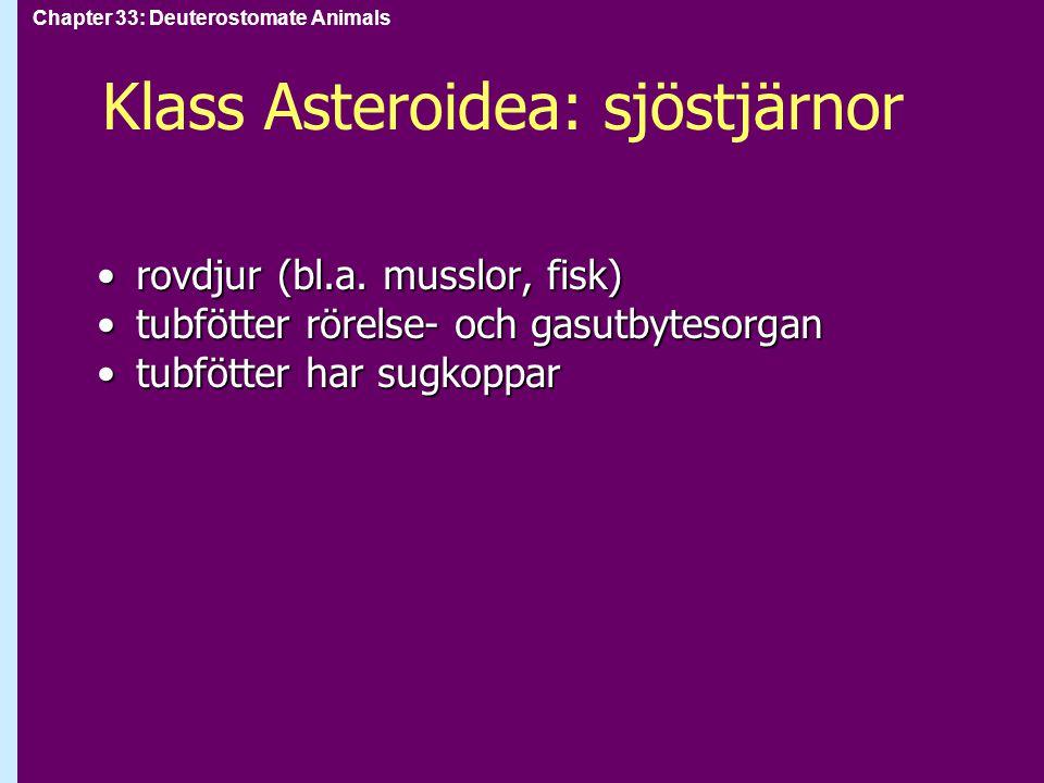 Klass Asteroidea: sjöstjärnor