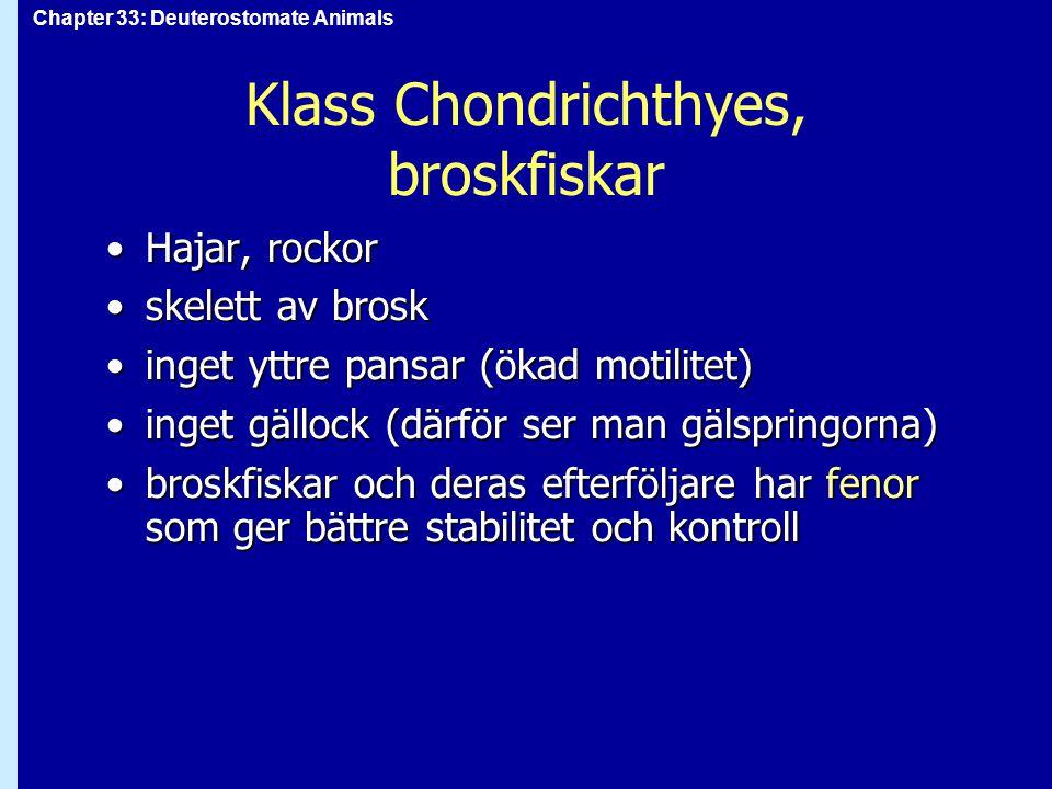 Klass Chondrichthyes, broskfiskar