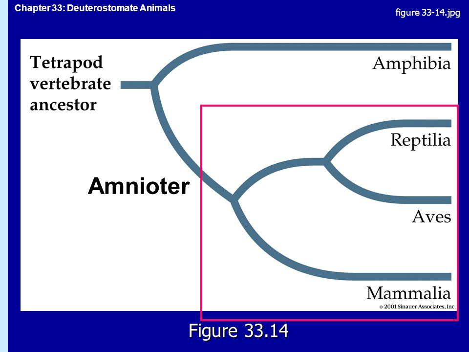 figure 33-14.jpg 33.14 Amnioter Figure 33.14