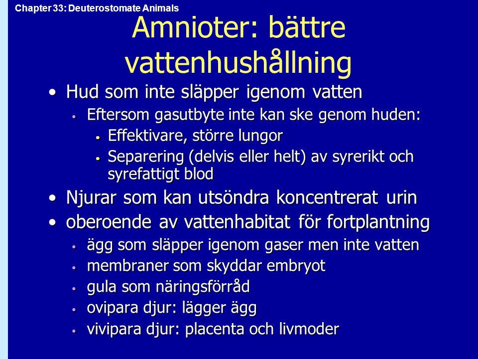 Amnioter: bättre vattenhushållning