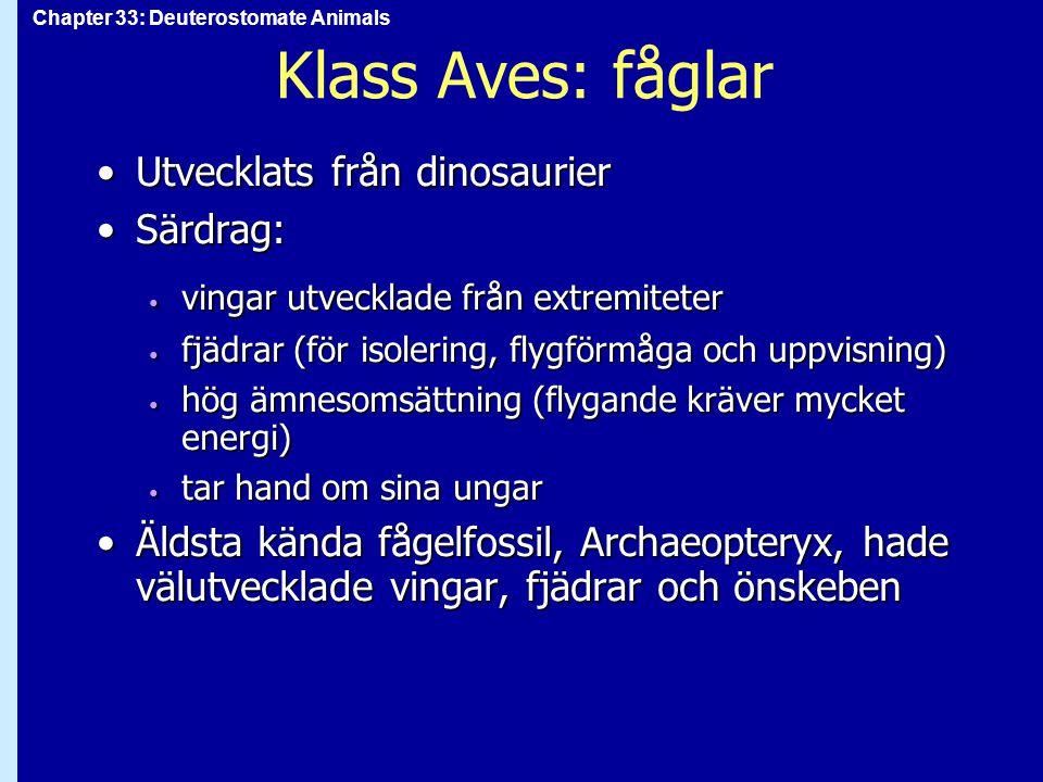 Klass Aves: fåglar Utvecklats från dinosaurier Särdrag: