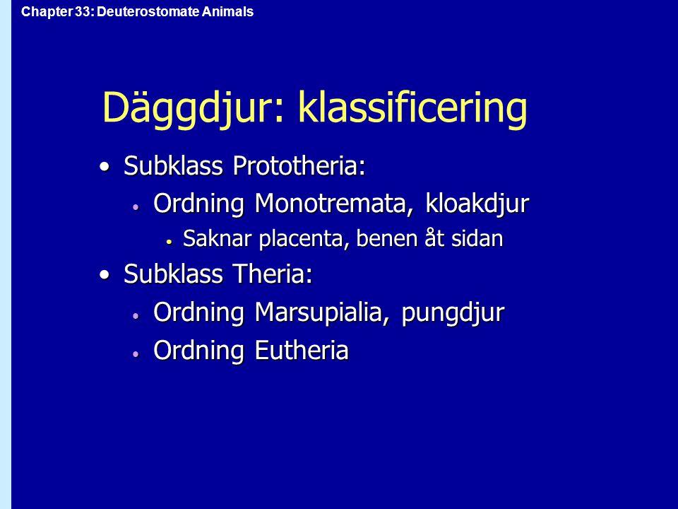 Däggdjur: klassificering