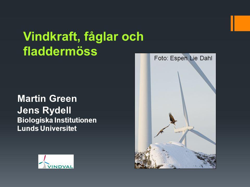 Vindkraft, fåglar och fladdermöss