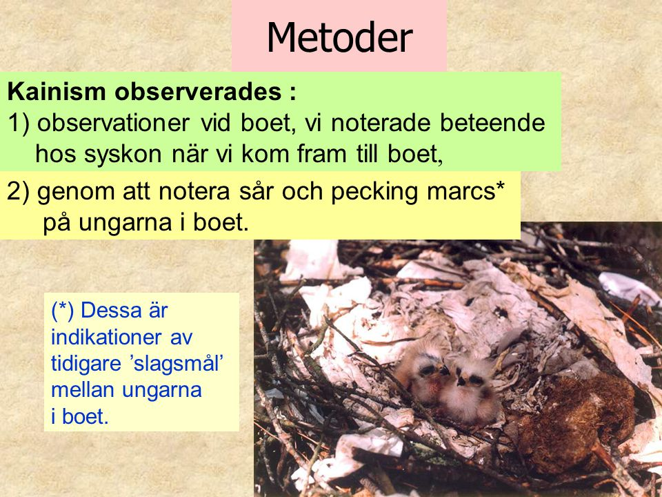 Metoder Kainism observerades :