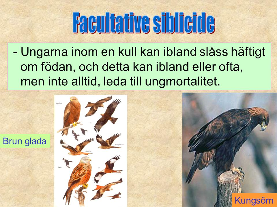 Facultative siblicide