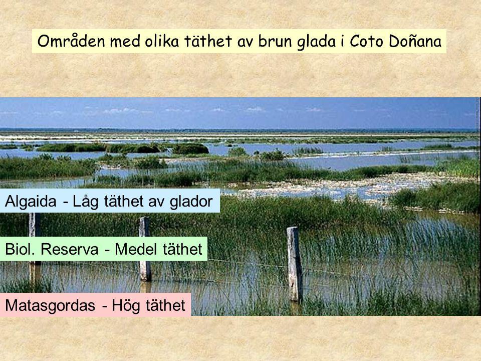 Områden med olika täthet av brun glada i Coto Doñana