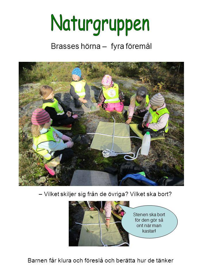Naturgruppen Brasses hörna – fyra föremål