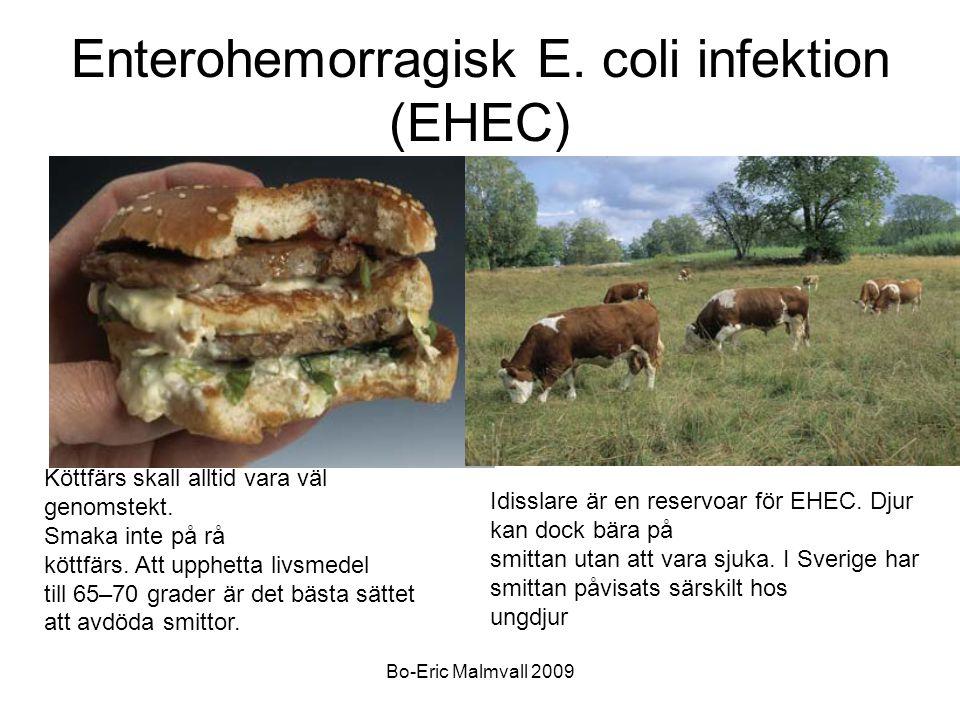 Enterohemorragisk E. coli infektion (EHEC)