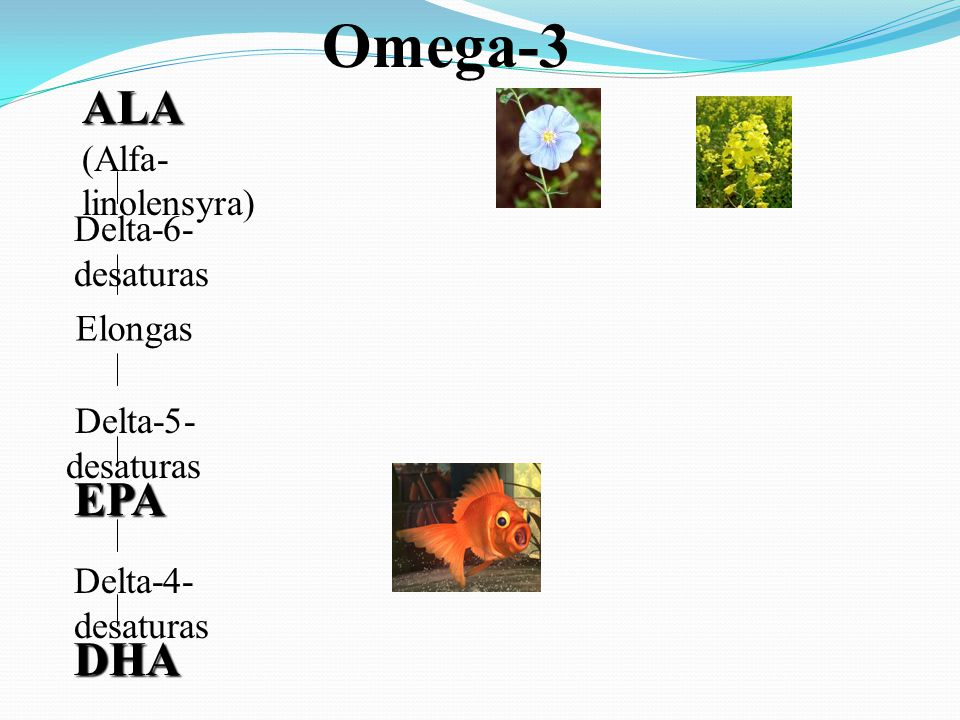 Omega-3 ALA (Alfa-linolensyra) EPA DHA Delta-6-desaturas Elongas