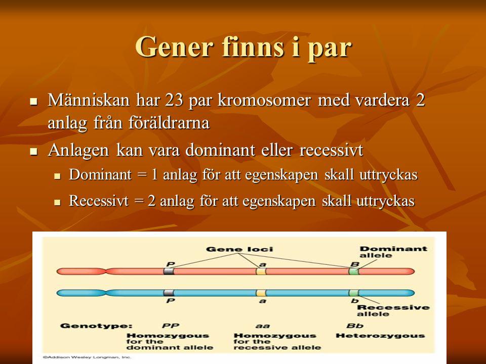 Gener finns i par Människan har 23 par kromosomer med vardera 2 anlag från föräldrarna. Anlagen kan vara dominant eller recessivt.
