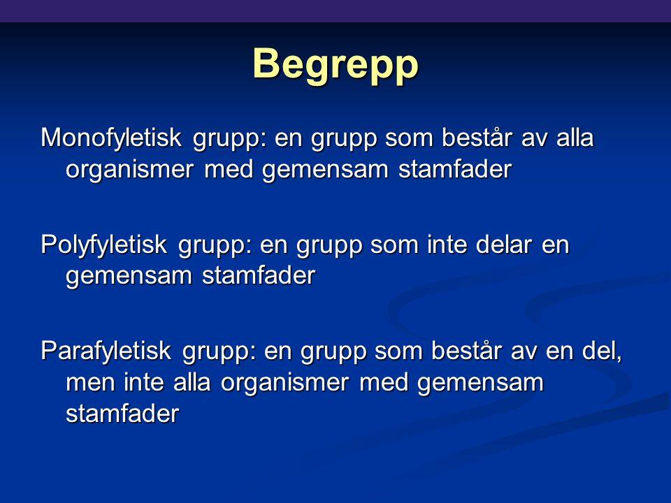 Begrepp Monofyletisk grupp: en grupp som består av alla organismer med gemensam stamfader.