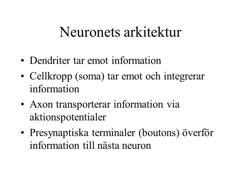 Neuronets arkitektur Dendriter tar emot information