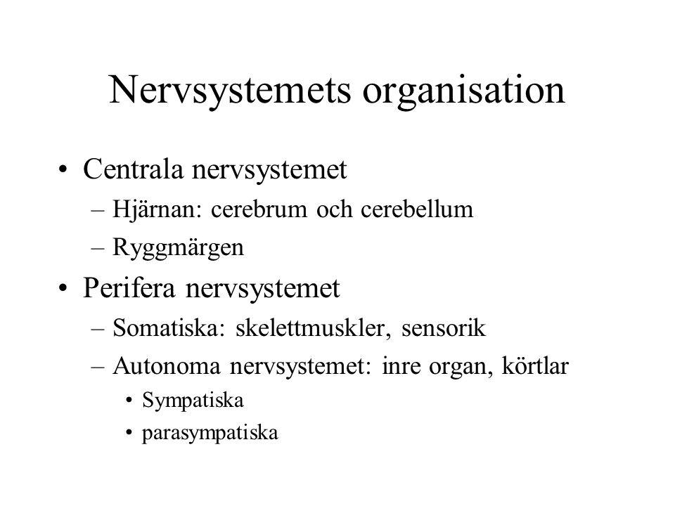 Nervsystemets organisation