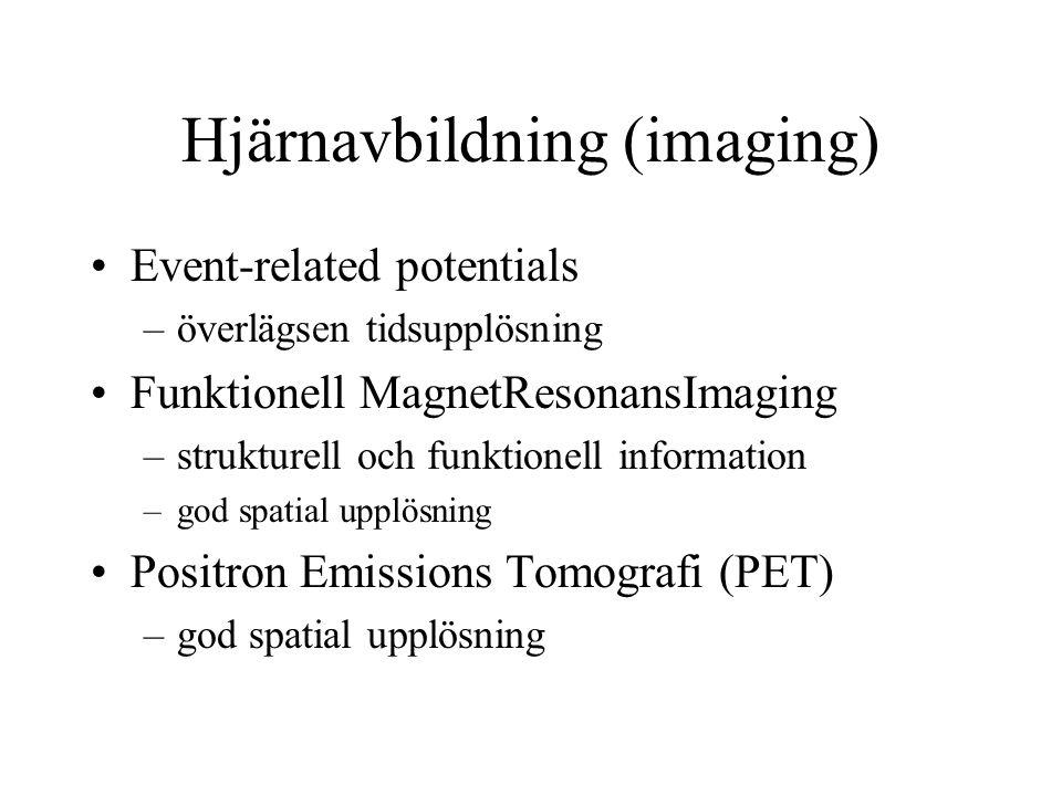Hjärnavbildning (imaging)
