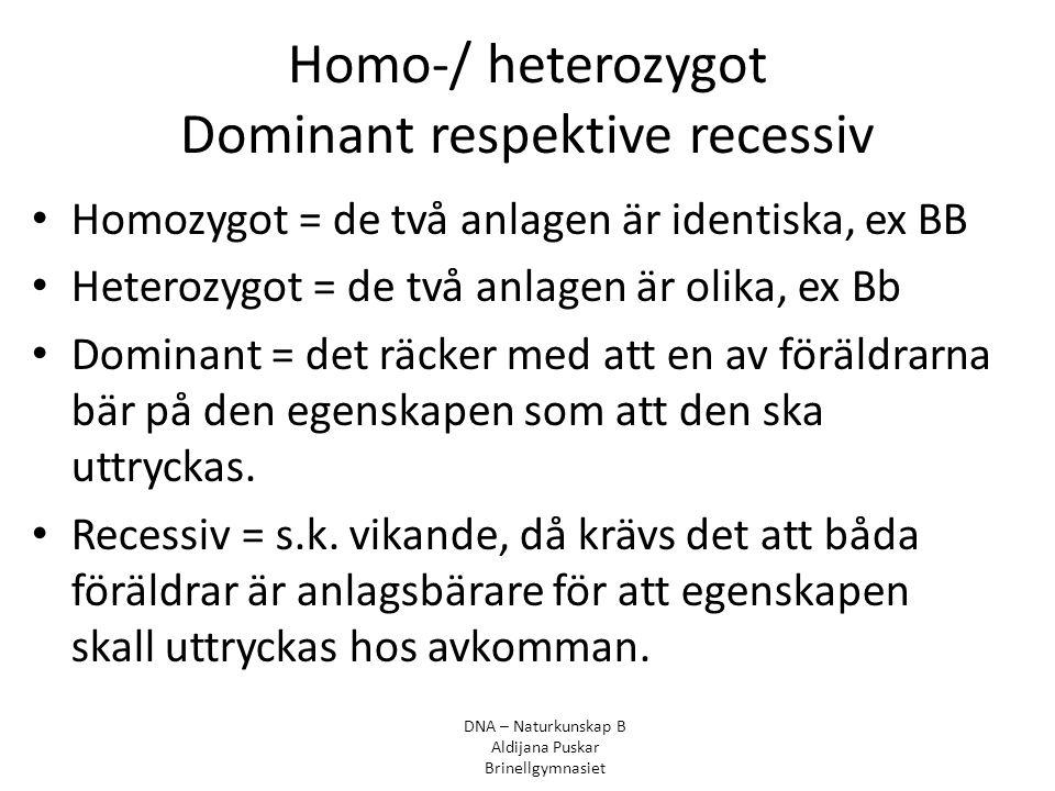 Homo-/ heterozygot Dominant respektive recessiv