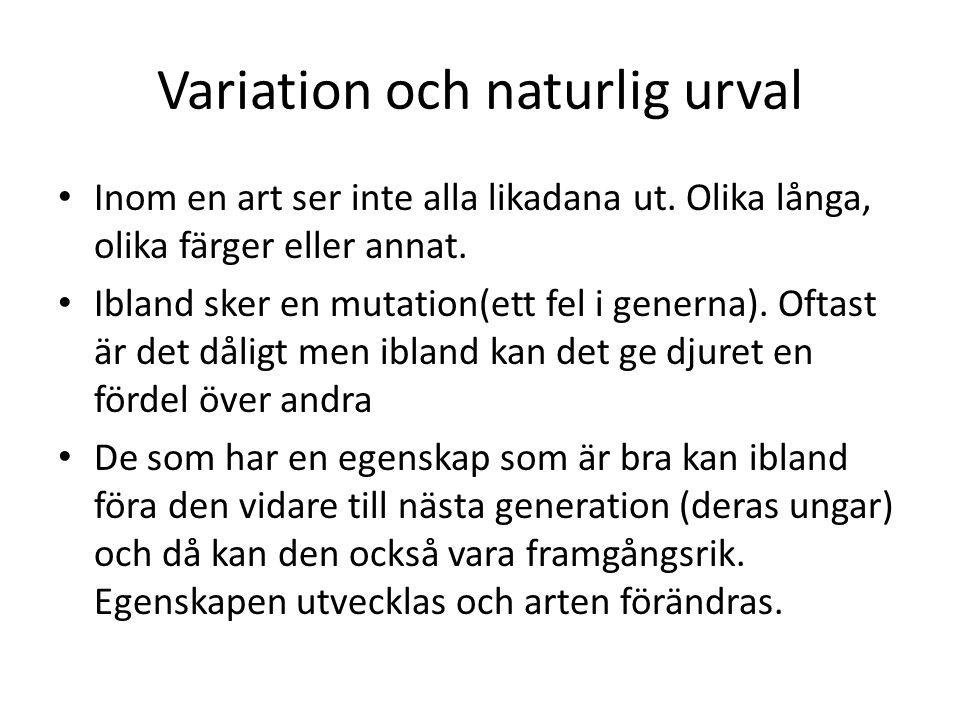 Variation och naturlig urval