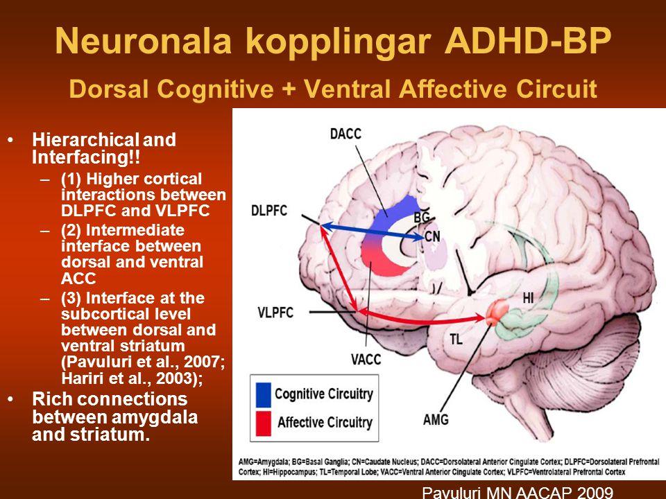 Neuronala kopplingar ADHD-BP Dorsal Cognitive + Ventral Affective Circuit
