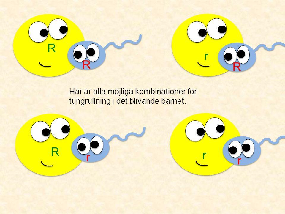 R R R r Här är alla möjliga kombinationer för tungrullning i det blivande barnet. r r R r