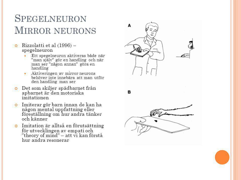 Spegelneuron Mirror neurons
